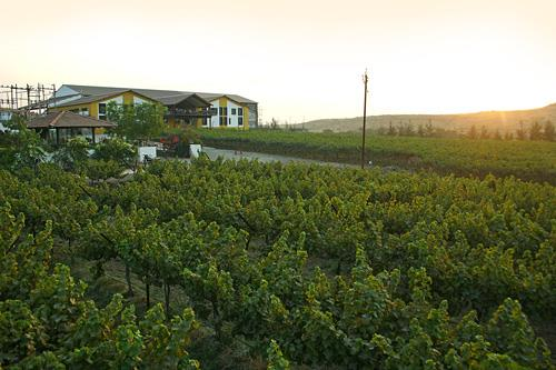 Wineries in Maharashtra