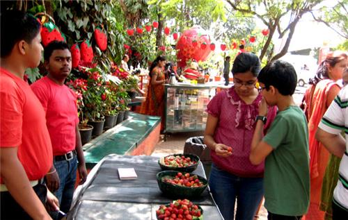 Strawberry Festival in Panchgani