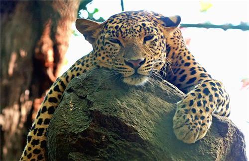 Wildlife in Meghalaya