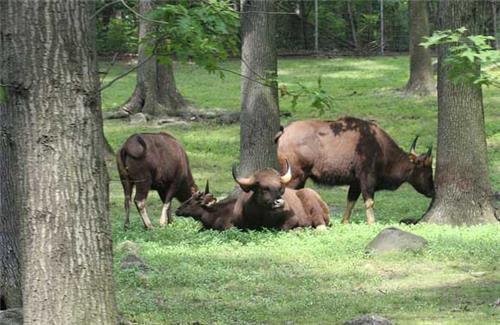 Mizoram Wildlife