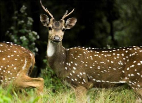 National Parks in Mizoram