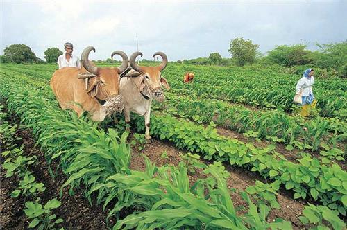 Economy of Madhya Pradesh