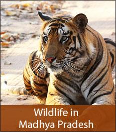 Flora and Fauna in Madhya Pradesh