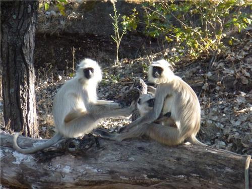Mandla Tourism