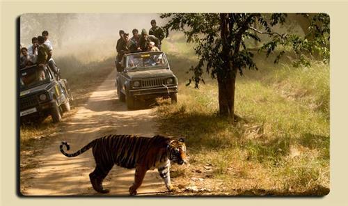 Umaria Tourism