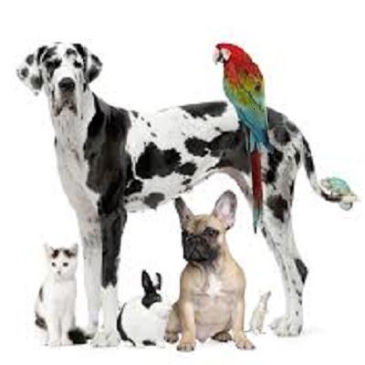 Pet Shops in Mysore