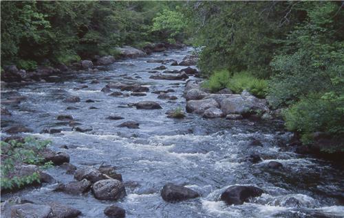 Nagaland rivers