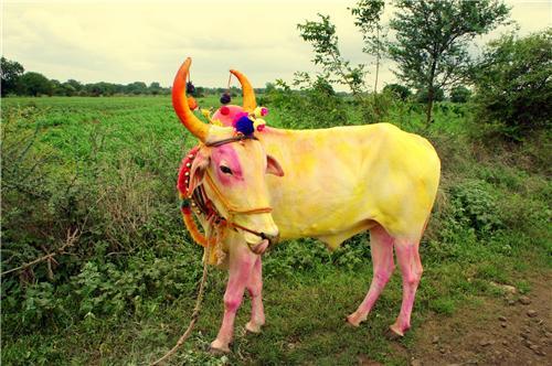Pola in Nagpur