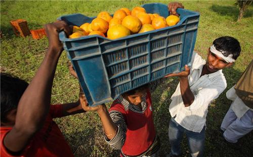 Nagpur is famously called the land of oranges