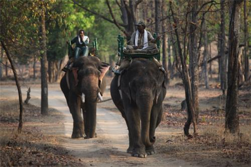 Pench National Park in Nagpur
