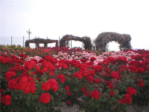 Parks and Gardens in Nagpur