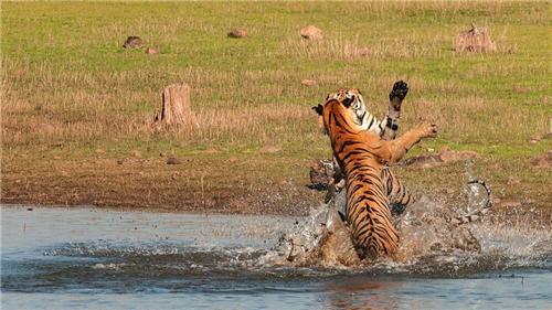 wildlife near Nagpur