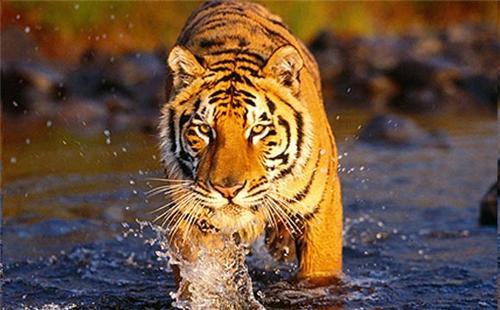 Wildlife Sanctuary near Nagpur