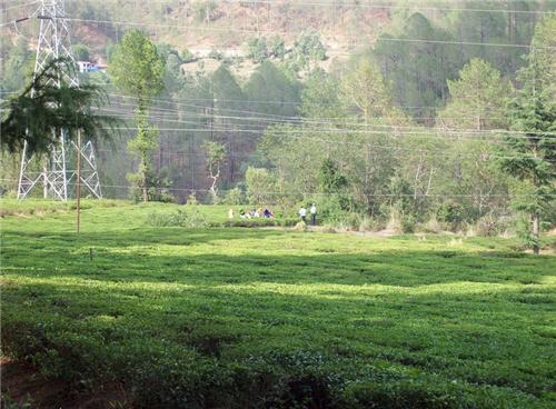Ghorakhal Nainital