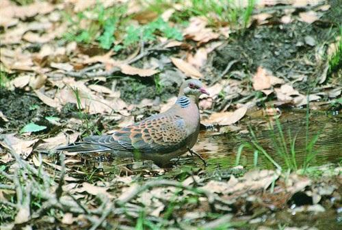 Pangot Bird Sanctuary Nainital