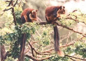 Gundla Brahmeswaram Wildlife Sanctuary in Nandyal
