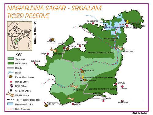 Nagarjunasagar Srisailam Sanctuary Nandyal
