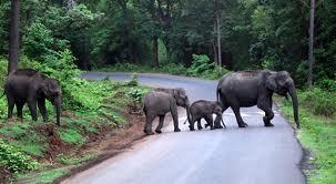 Madumalai Wildlife Reserve