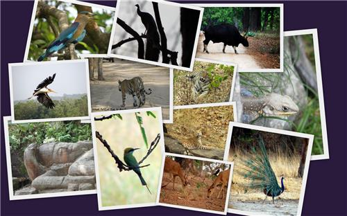 Wildlife Destinations in Odisha