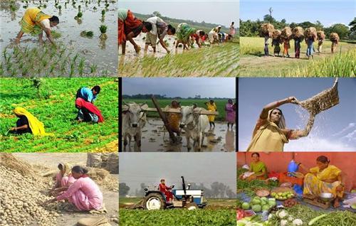 Agrarian Economy in Jagatsinghpur