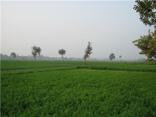 Agricultural fields in Panipat