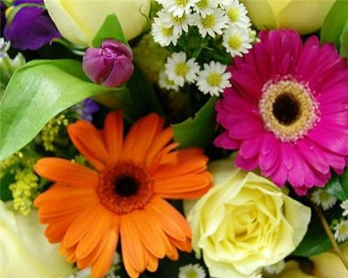 List of Florists in Panipat
