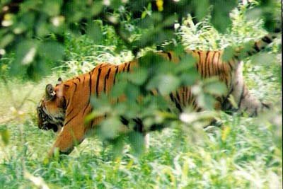 Pilibhit Tiger Reserve Location