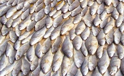 Puducherry Fisheries