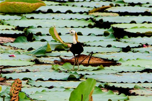 Ousteri Wetland and National Park in Puducherry
