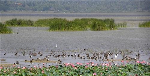 Ousteri Wetland in the National Park of Puducherry