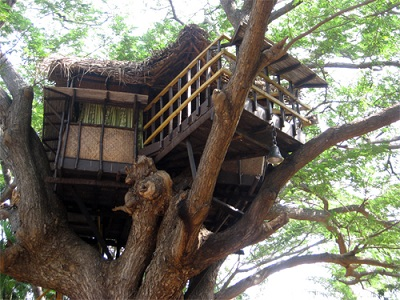 Tree House at Chunnambar