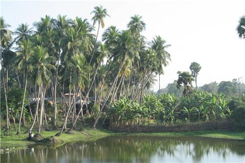 Raghurajpur Village near Puri