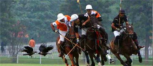 Rajasthan Polo Club