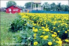 Investment Opportunities in Ranchi's Horticulture