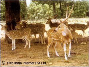 Wildlife Parks in Ranchi, Jharkhand