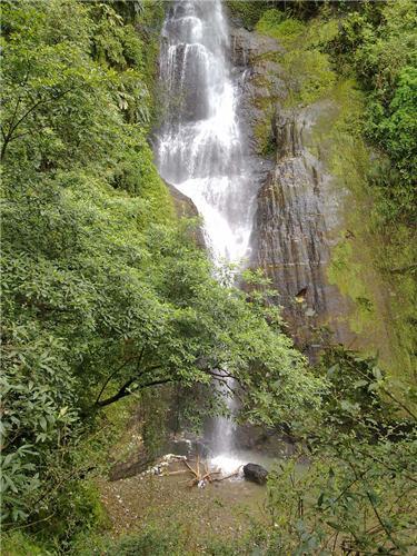 Greenery around the Chadwick Falls