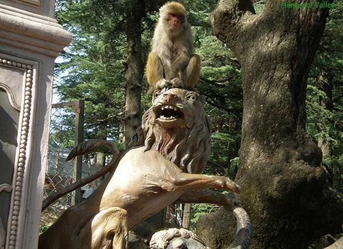 Monkeys at Jakhoo Hill
