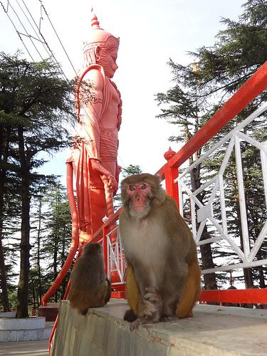 The Hanuman Statue near Jakhoo Temple