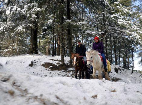 Shimla to Kurfi