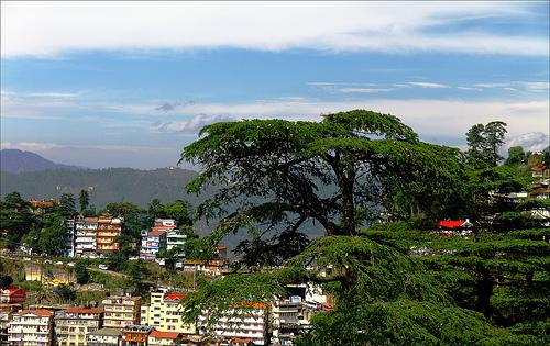 About Shimla