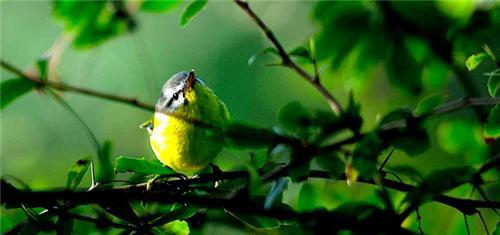 Wildlife watching in Shimla