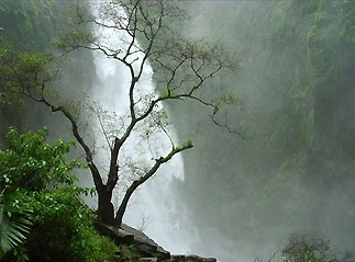 Kunchikal Falls in Shimoga