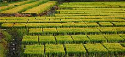 Agriculture in Shimoga