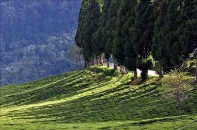 Sikkim Landscape