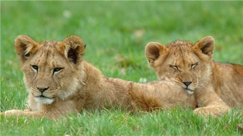 Vasona Lion Safari