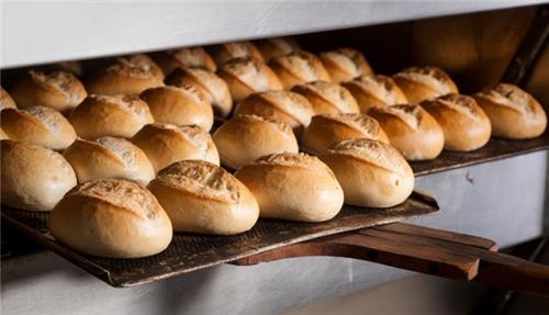 Bakery in Surat