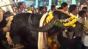 Sadar Festival in Telangana