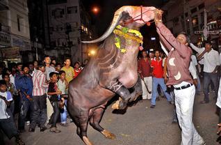 Sadar Festival