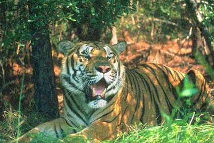 Nagarjunsagar Tiger Reserve in Telangana
