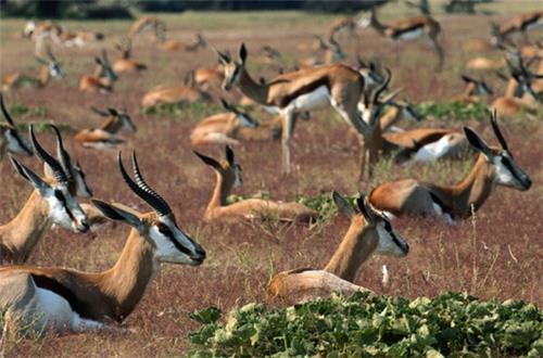 Deer Park in Telangana